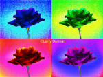 Color Infrared Photograph of Roses